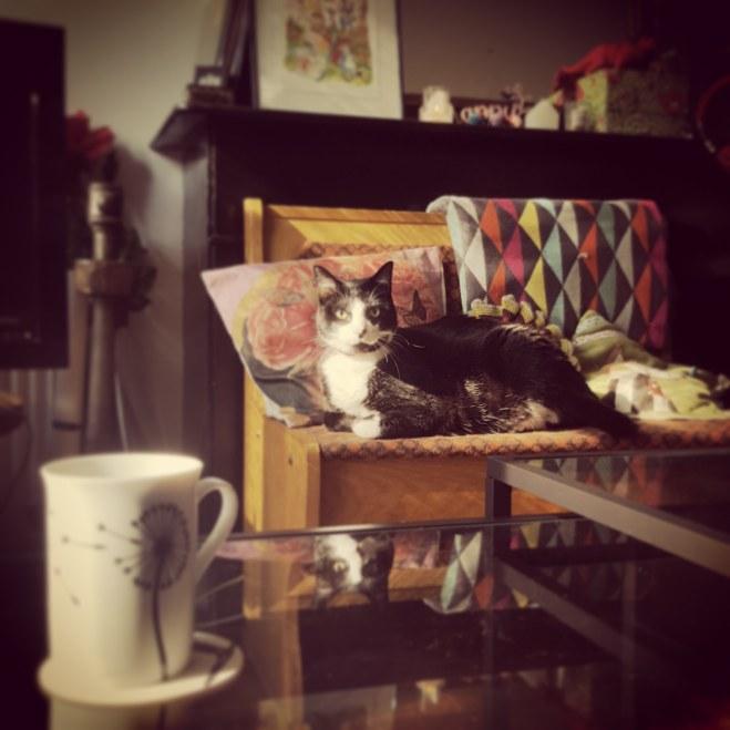 catssleepeverywhere